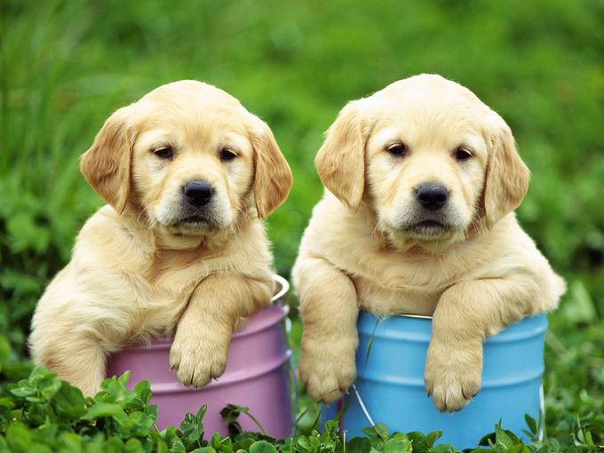 ilk köpekler