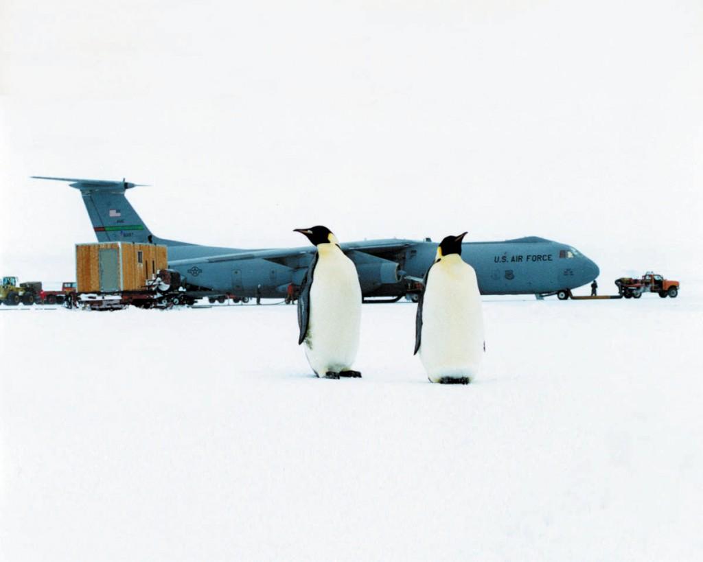 Uçak pistinde penguenler