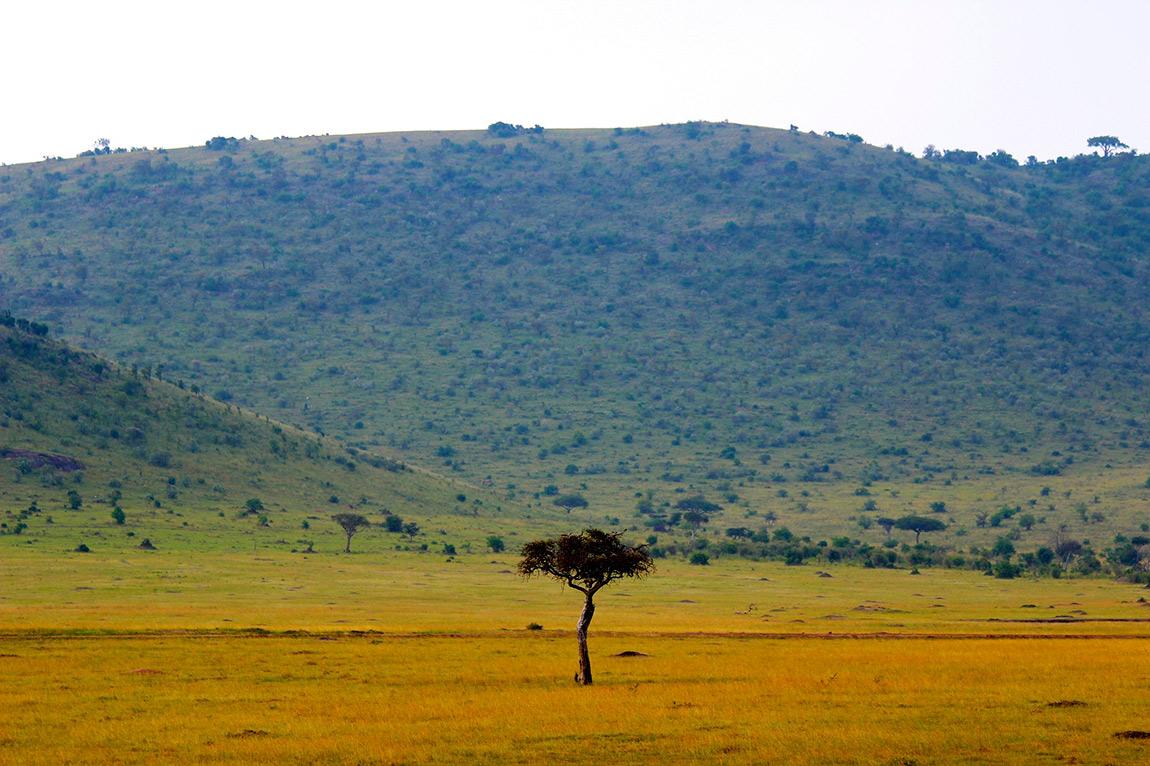afrika savanası