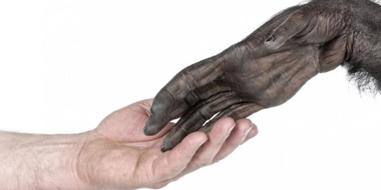 insan eli şempanze eli