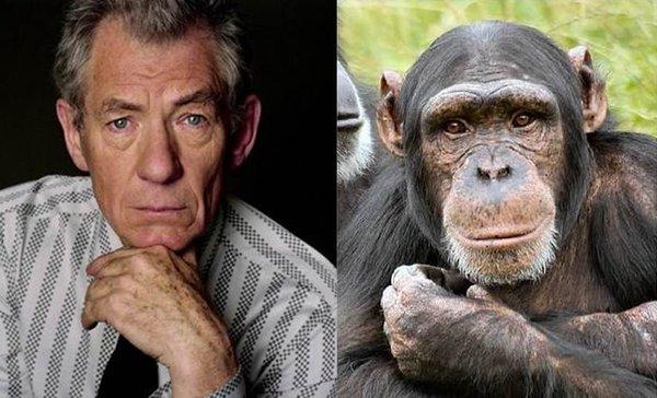 insan ve şempanze