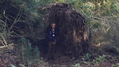 David Jaques ağacın nasıl duvar olarak kullanılabildiğini gösteriyor
