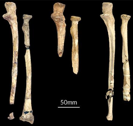 iskelet yapısı