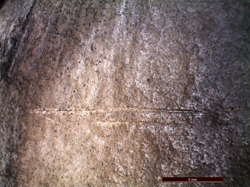 Mikroskop altında görülebilen kemik üzerindeki kesik izleri