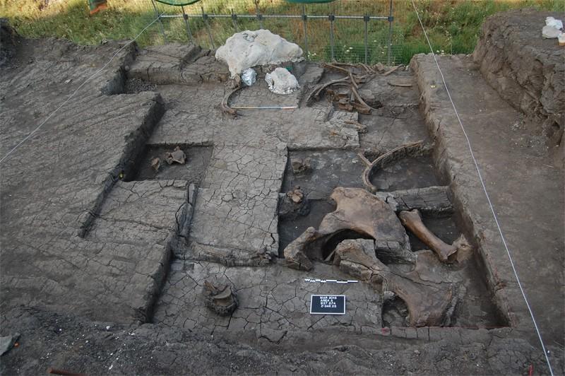 yunanistan fil kesimhanesi