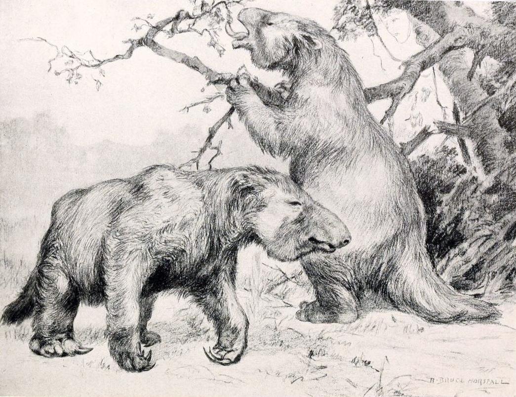 nesli-tukenmis-hayvanlar