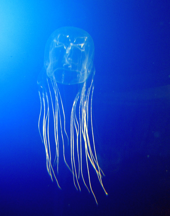 Dünyadaki En Tehlikeli 10 Hayvan: Deniz Anası