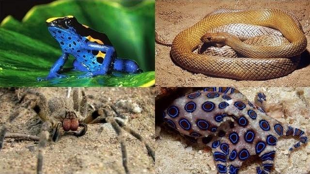 Dünyadaki En Tehlikeli 10 Hayvan