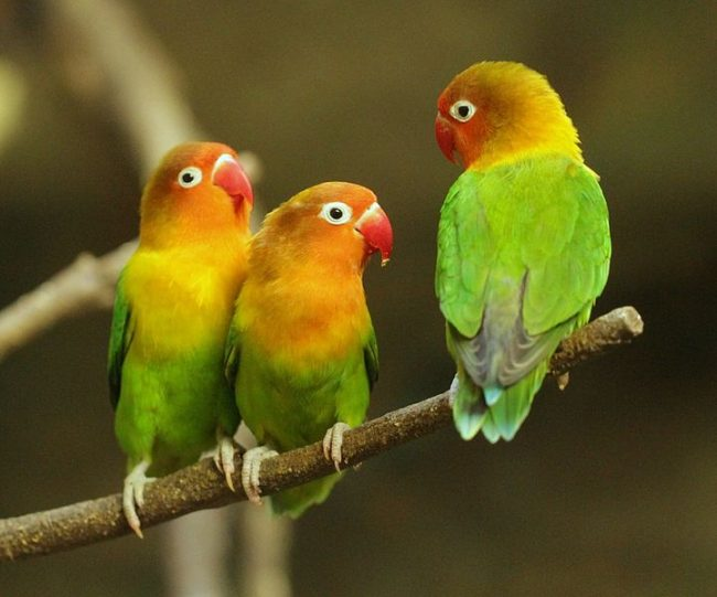 cennet-papagani