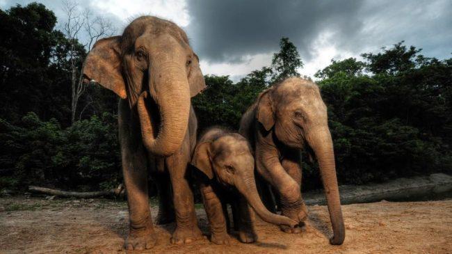 asya-filleri