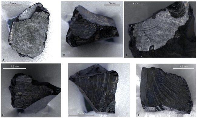 SuttonHoo bitüm örnekleri