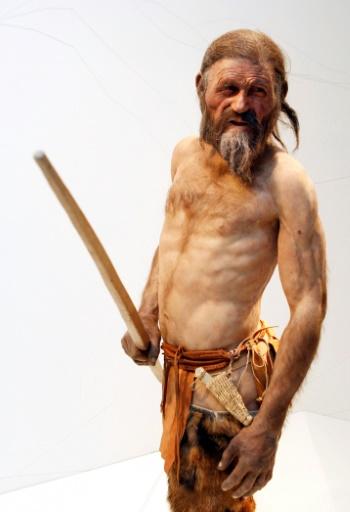 """İtalya,Schnal Vadisi buzulunda 1991 yılında keşfedilen """"buz adam"""" mumya Ötzi'yi temsil eden bir heykel, 28 Şubat 2011'de İtalya Bolzano Arkeoloji Müzesinde sergilenmiştir"""