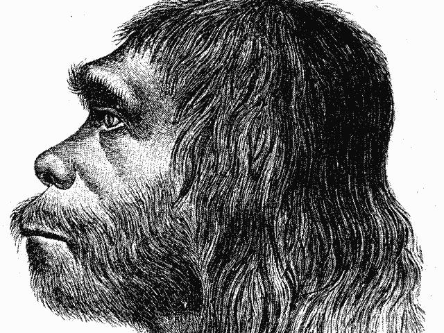 Neandertallerin Yam Yam Olduklarına Dair Kanıtlar Netleşti